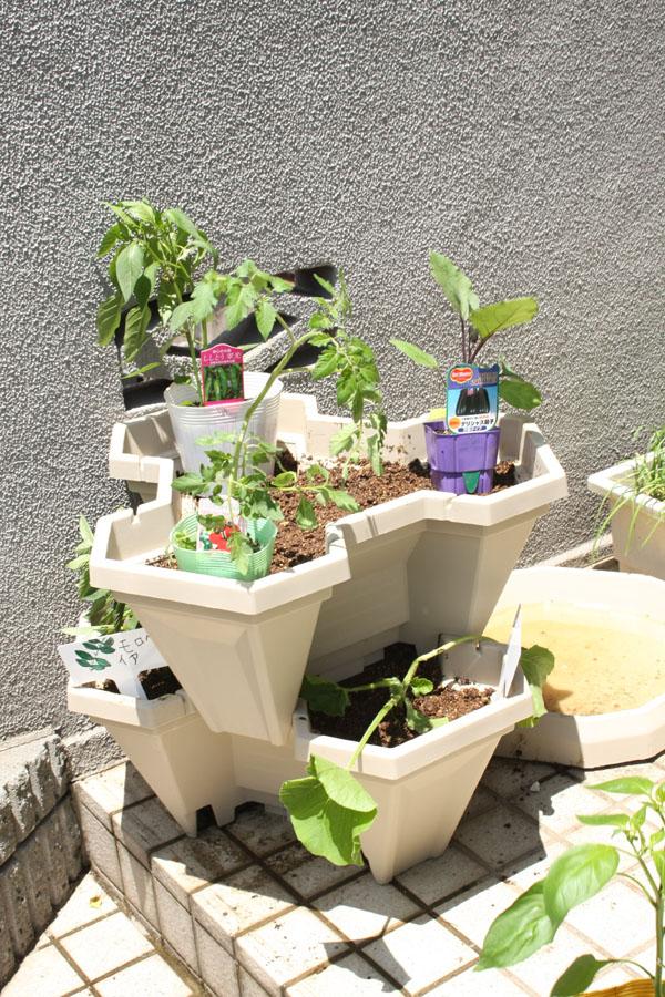 栽培が簡単と言われている、プチトマトとナス、シシトウを2段目に