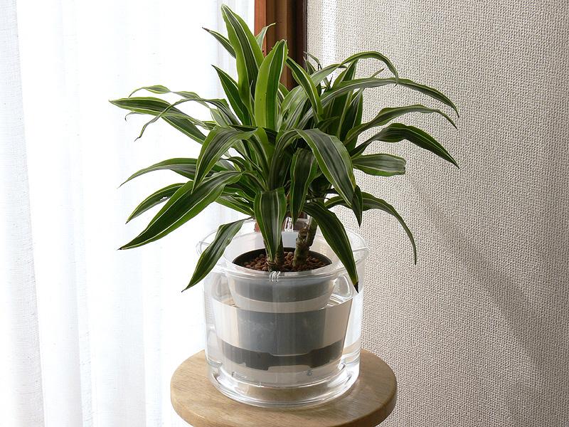 観葉植物付きの「ディアネイチャー21」。このまま届いたのにはびっくりした