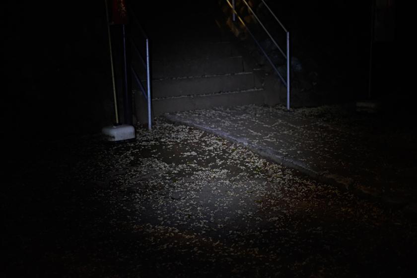 街灯のない夜道を照らしてみたところ。お散歩には十分だ