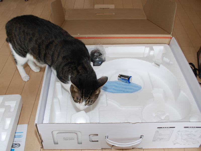 5.4kgもある大猫の鉄蔵が小さく見えるほど箱は大きい