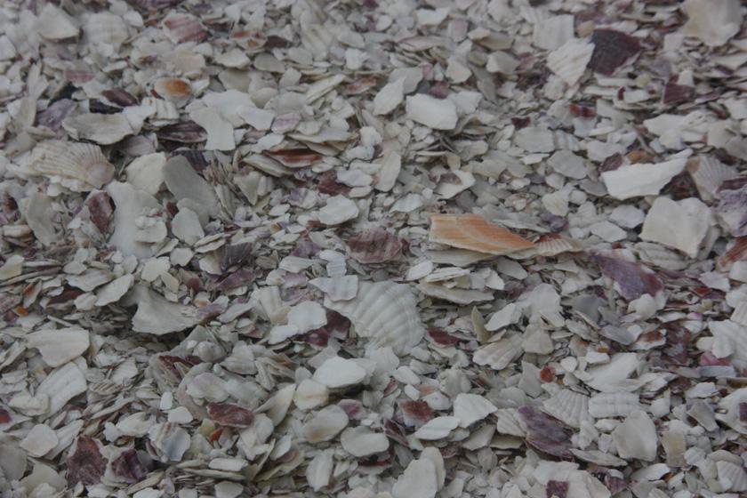 実は発電所の地面には、ホタテ貝の貝殻が敷き詰められている。光の反射で発電効果を高める狙いがある