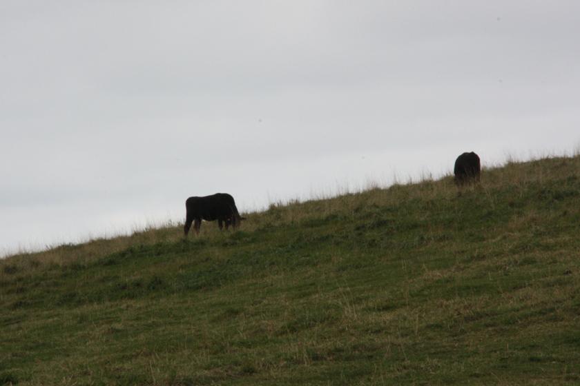 丘陵のほとんどが牧場。発電所はそれに同居しているような格好になる