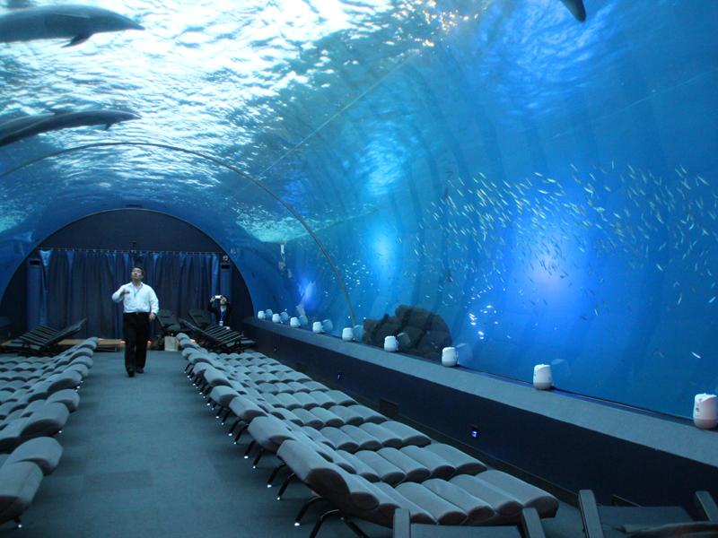 会場となった八景島シーパラダイスの「ドルフィンファンタジー」。トンネル型の水槽の中をバンドウイルカが自由に泳ぐ