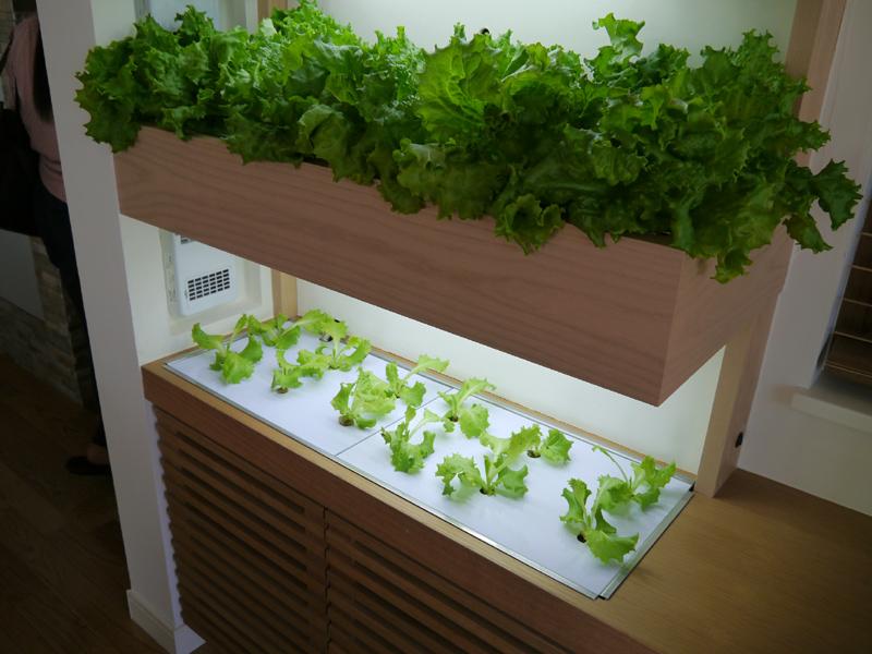 おやさい工房。部屋のなかで栽培して食べることができる