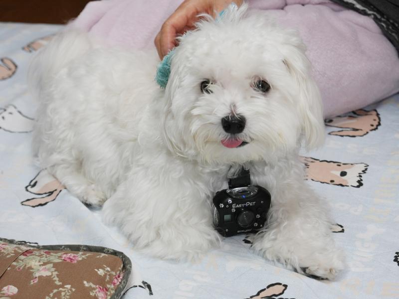 我が愛犬「定吉」の首に巻かれているのが、今回紹介する「EASY PET」