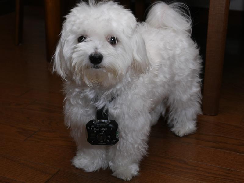 定吉に着けたところ。小型犬だと、カメラ位置はだいぶ目線の下に行ってしまう