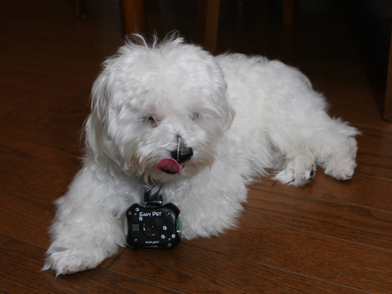 気にならないときはカメラをつけたまま寝ちゃうときもある