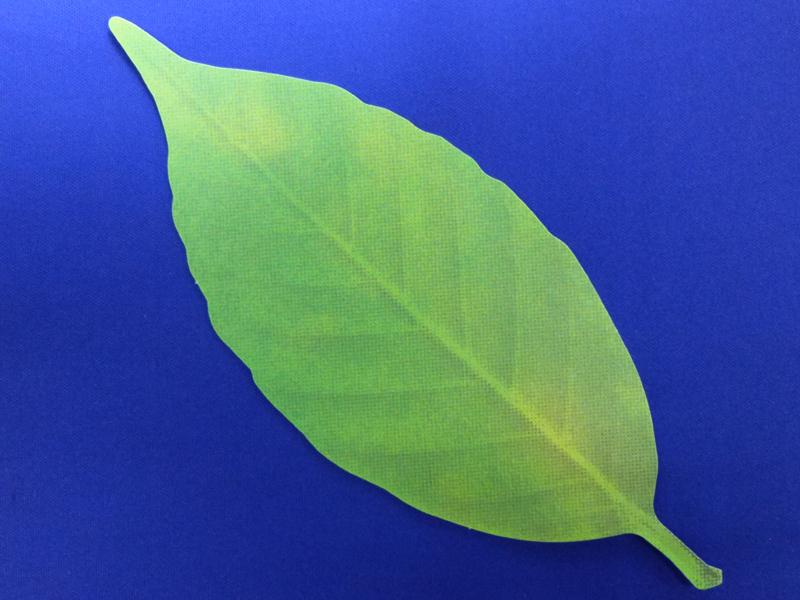 leafの表面は葉っぱに見える印刷だ
