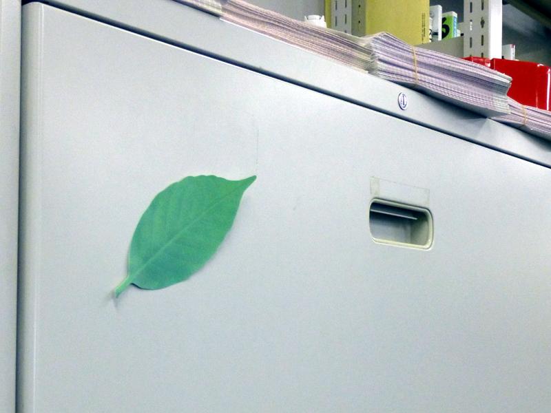 ロッカーなど金属製の冷たいものに貼ると、それだけで緑色が濃くなる