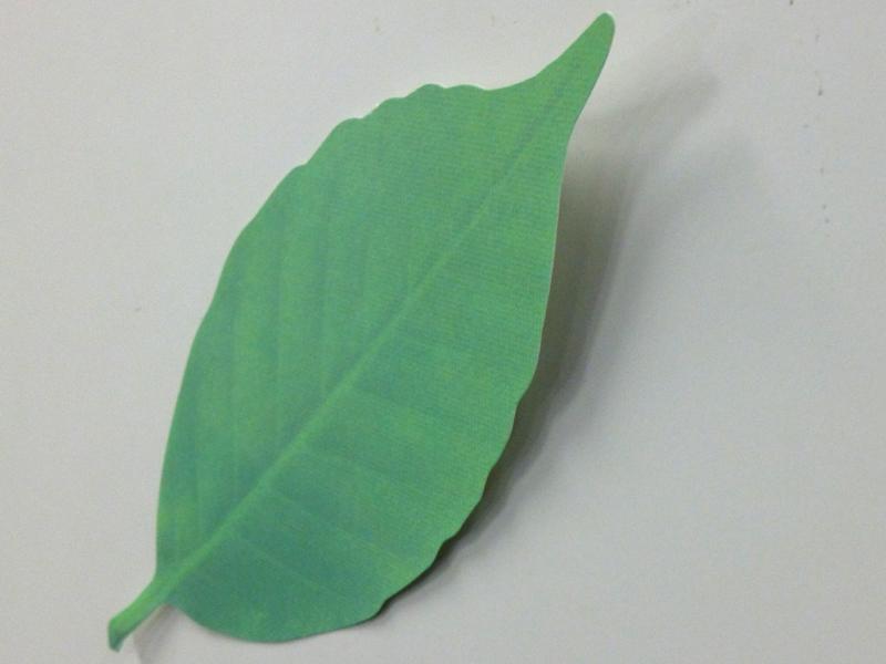 再剥離紙が小さいので、葉っぱが浮いた感じになってカッコイイ