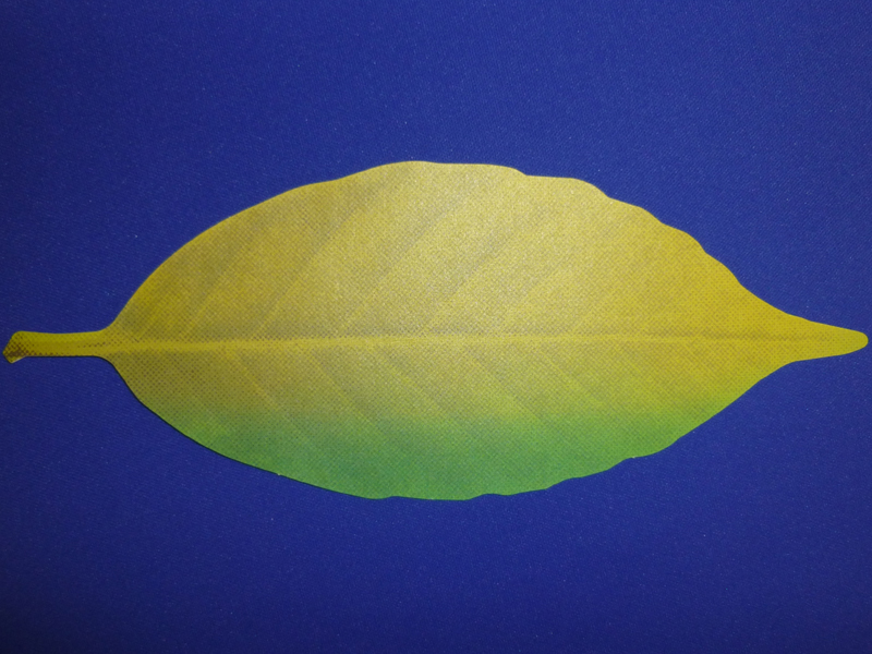 暑い場所に置くと落ち葉のような黄色になる