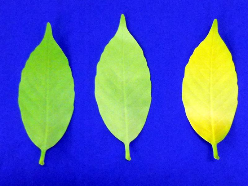 左から、冷たい場所、通常の室内、暑い場所に置いたときの色