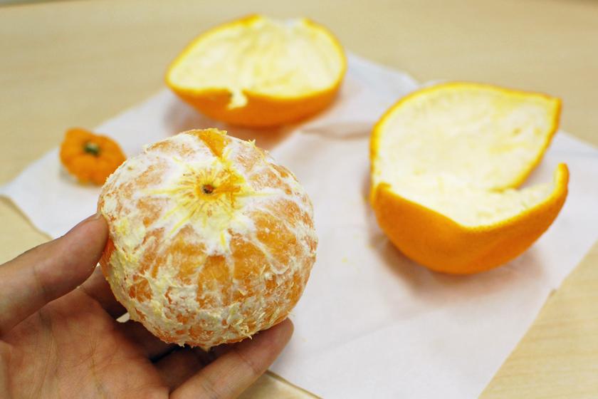 果物の分厚い皮が、簡単に剥ける
