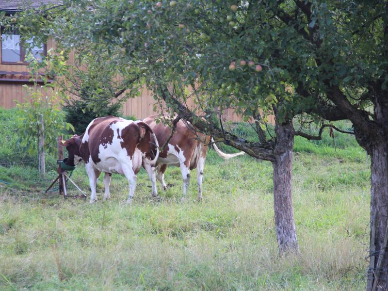 周りはなだらかな丘が続くのどかな場所。本社敷地のすぐ隣には放し飼いの牛がいた