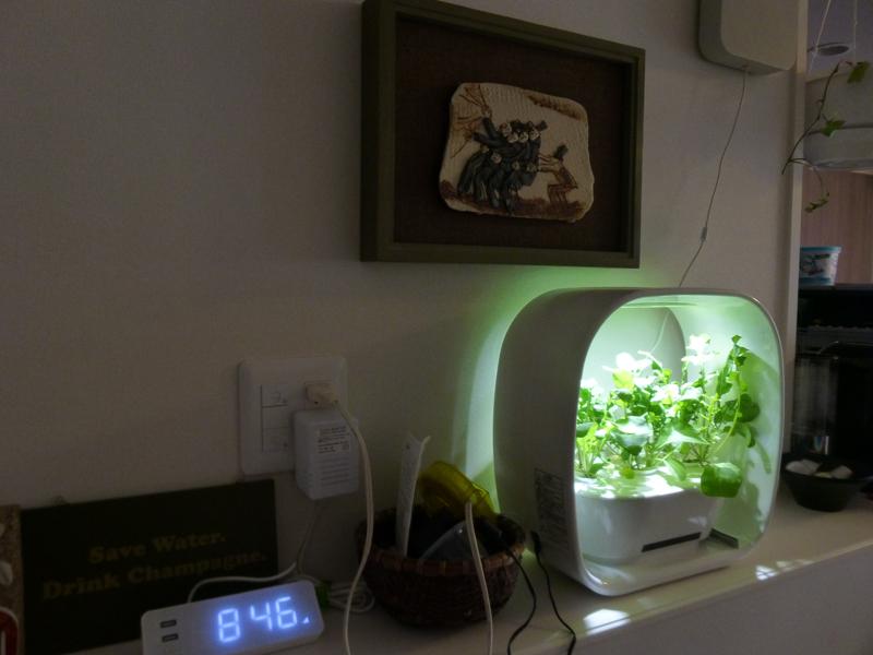 夜リビングで付けておくと、照明の一部としても機能するくらい明るい