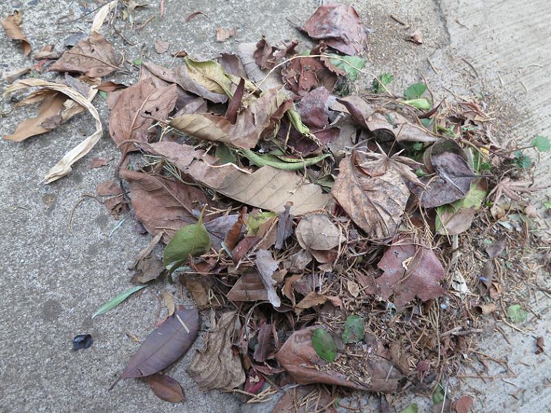 吹き集めた落ち葉