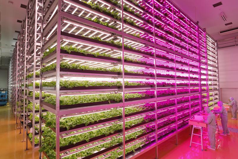植物工場の栽培室