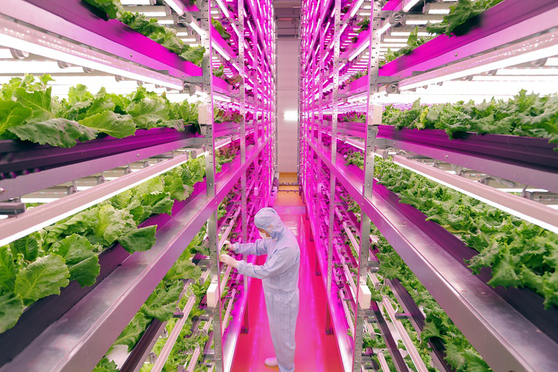17,500本の植物育成用のLED照明が使用されている