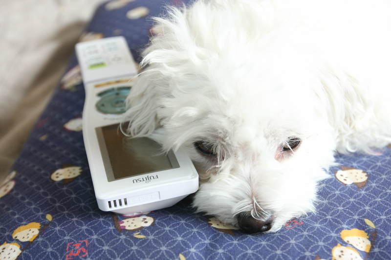 なんか寒いなと思ったら、犬がリモコンを枕にして寝ていた。リモコンを机に戻せば再び快適空間に。エアコンから遠いキッチンにリモコンを持っていけば、そこを中心に調整するようになる
