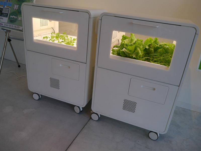 SQUARE Galleryでは野菜も育てている