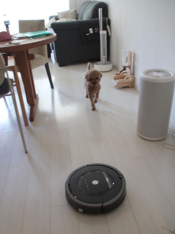 最初はかなり怖がっていたが、使い続けるうちに慣れた。今では犬が室内にいる状態でもルンバを起動させている