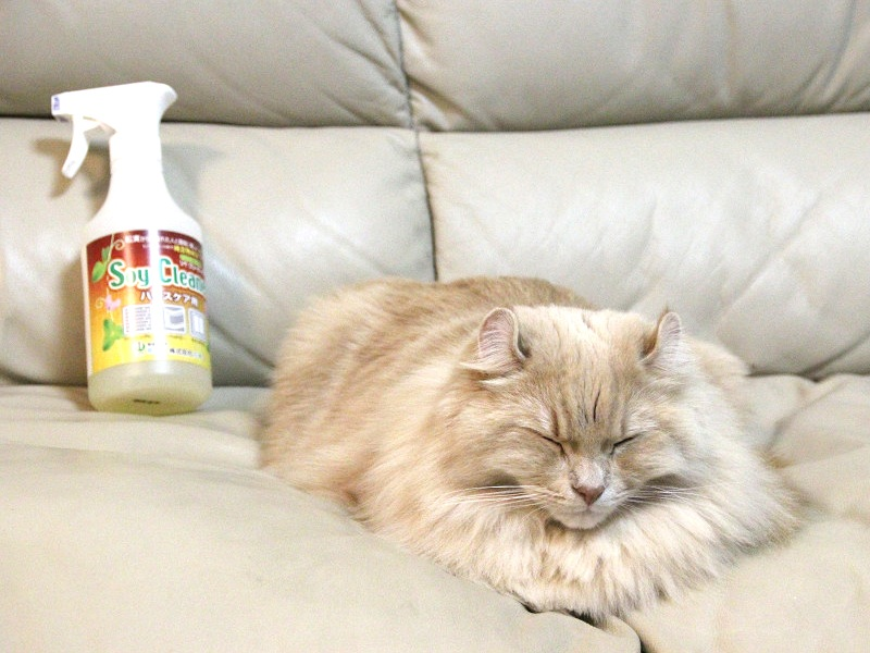 掃除後すぐに愛猫がソファを陣取っていた。安心して寝かせられる