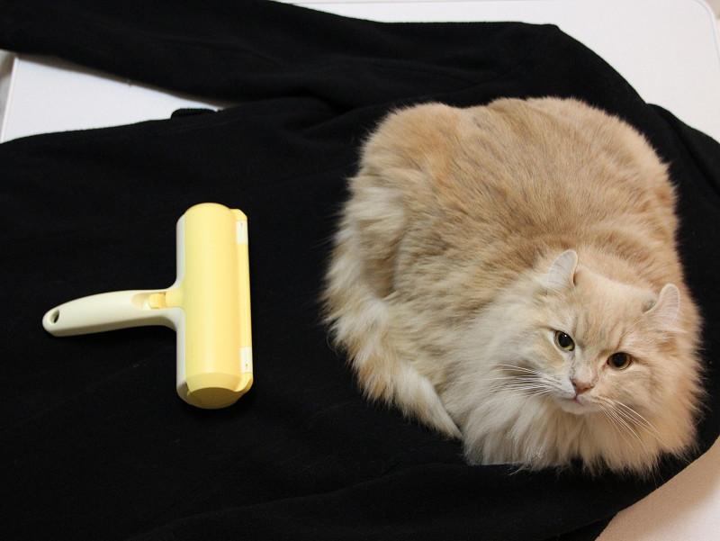 ペットの毛がとれるクリーナー、コートの上に座られて毛だらけに……