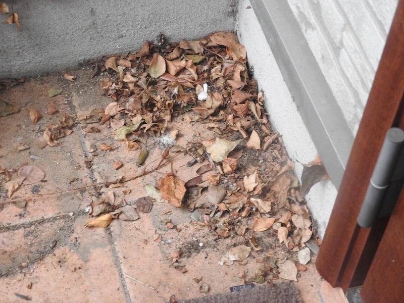 溜まってしまった枯れ葉