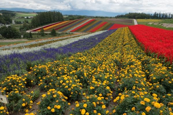 季節によって色々な花が咲いてとても綺麗