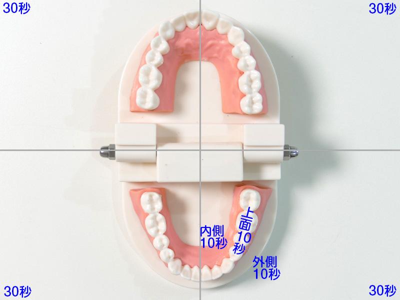 口の中を上の歯左右、下の歯左右と4つに分けて、それぞれを30秒かけて磨いていく。プロフェッショナルタイマーが30秒毎にシグナルを出すが、時計を見ながらの方がより確実だ