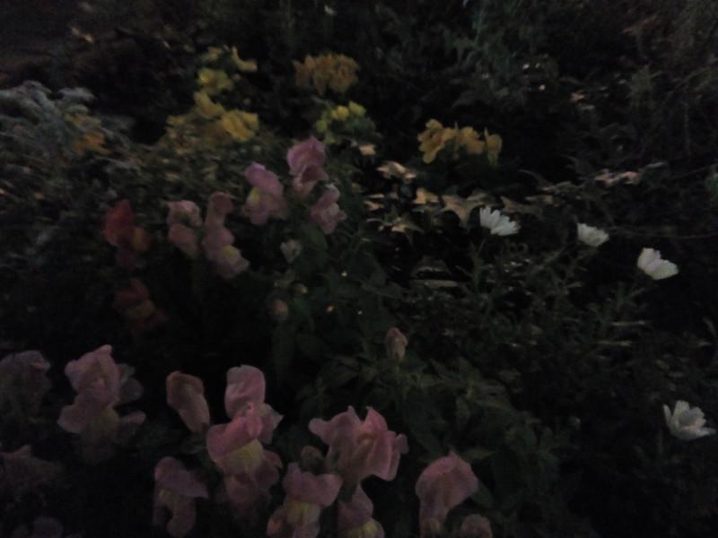 夜間撮影サンプル