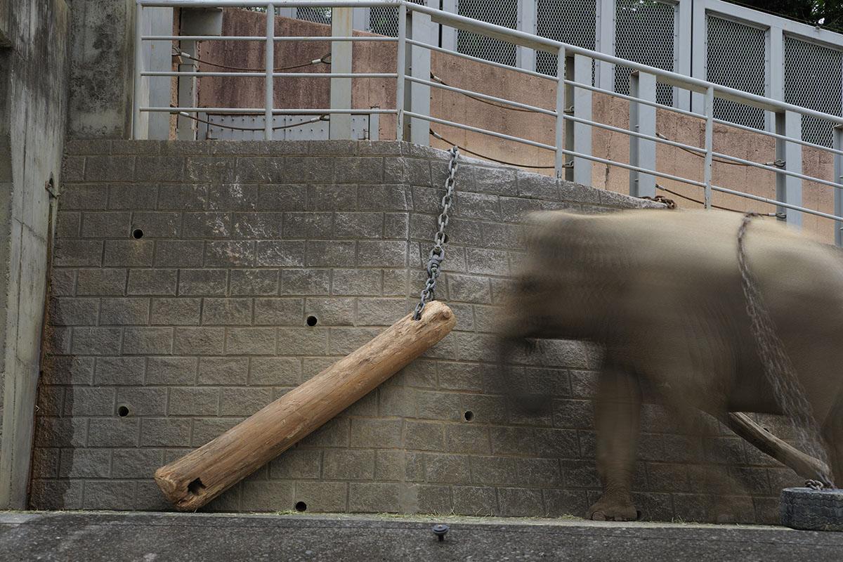 さきほどの鎖でつながれた木材ですが、動物園の象のエリアです。そこに象が入ってくると……動いている象をハイレゾショットで撮るとこんなふうにブレてしまいます。普通のブレではなく、複数枚の写真を合成したようなブレになってしまいます。
