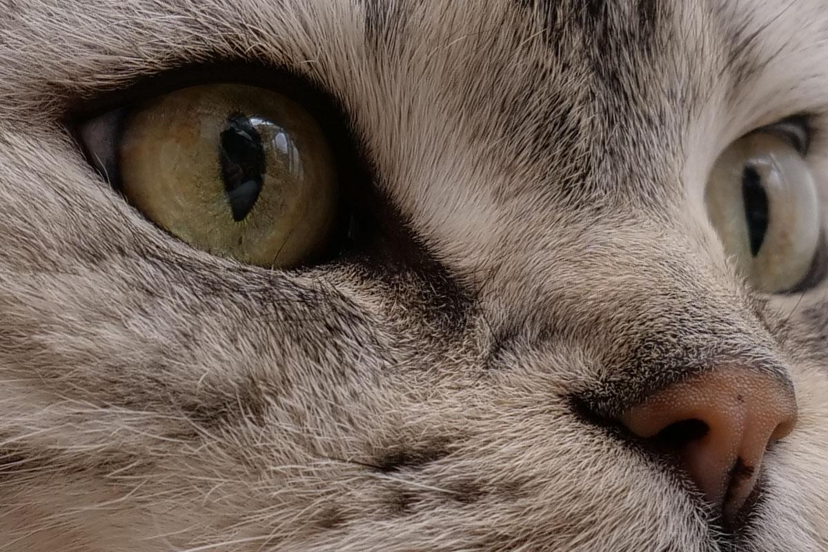 何となく猫スナップ。ドットバイドットにすると瞳孔も鼻の肌質感も毛も、ぜ~んぶクリア!