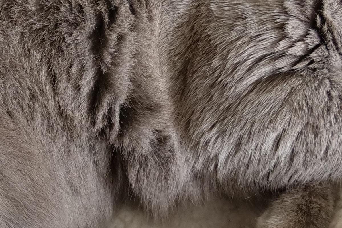 右は猫の肘(?)あたりのドットバイドット画像ですが、毛の質感までバッチリです。