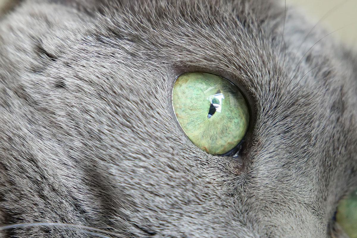 ドットバイドット画像では眼球表面に外光の映り込みが見えます。緑色の映り込みは木で、この場所を知っていると「あぁあの木が写ってるんだね」と判別できたりするほど、細部までよく写っています。