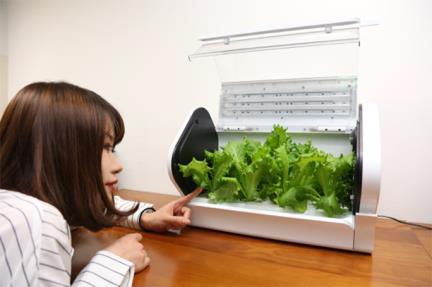 野菜栽培キットやさい物語