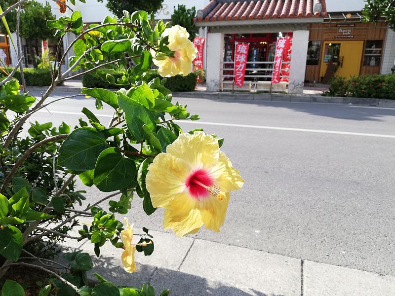 陽射しの強い屋外で撮影。花はきれいに撮れている。右上の部分が少し歪んでいるような印象もあるが、全体的にきれいに撮影できている
