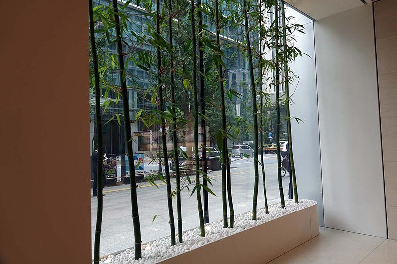 竹が印象的