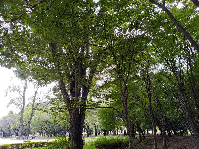 逆光で撮った林。左の明るい部分もHDR++で撮った写真は白飛びせず、葉の1枚1枚や木の幹の様子も確認できる。