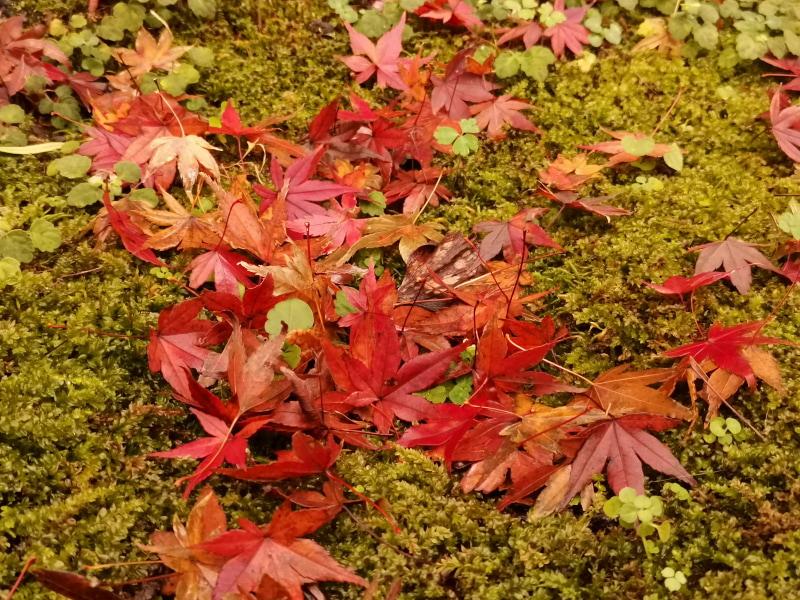 内田氏にお褒め頂いたうちの1枚。落ち葉でも工夫ひとつで奇麗に撮れる