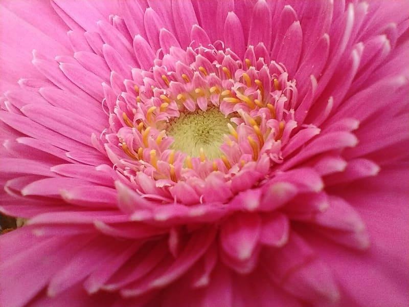 マクロカメラで花を撮影