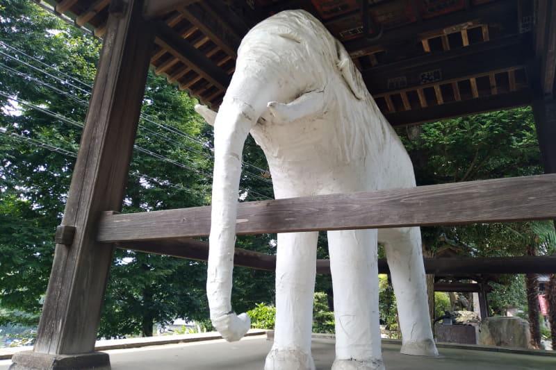 Rakuten Miniでは、白いところがきちんと白く表現できている。ただ、若干白飛びしてしまっているのが残念