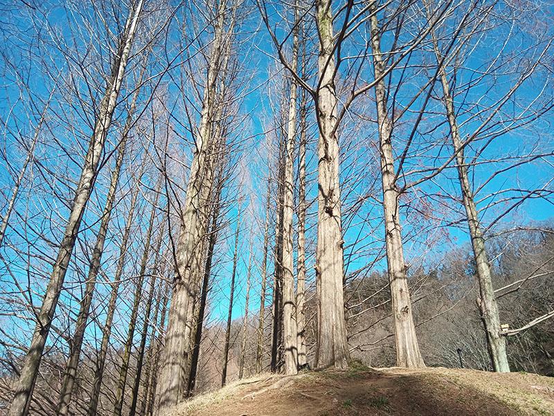 枝の細部までわりとしっかり描写されている。ちなみにオリジナルの画像は4672×3504ピクセル。
