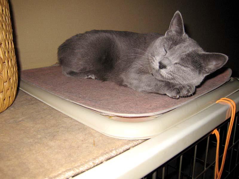 動物クン用の暖房装置導入直後。このように暖かいところで寝まくる。
