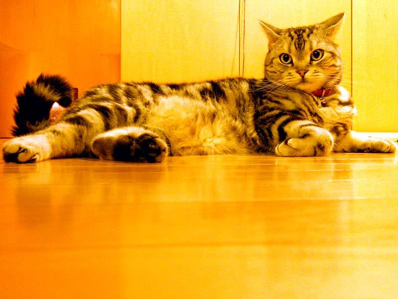 寒くても問題ナシの猫。毛皮のクオリティが違うのだろうか?