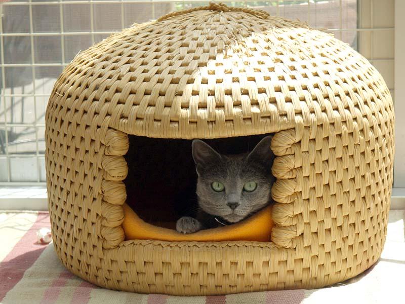 猫ちぐらに入って昼寝中だったがカメラを向けたら起きたの図。夏前の写真だが、春先とか秋口には猫ちぐら進入率が高い。冬場も入るが、冬場は猫用ホットカーペットが人気だ。