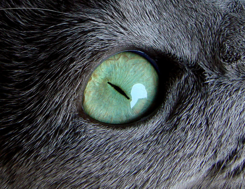 猫種や年齢によって目の色が違うゾ!! 睫毛もある。