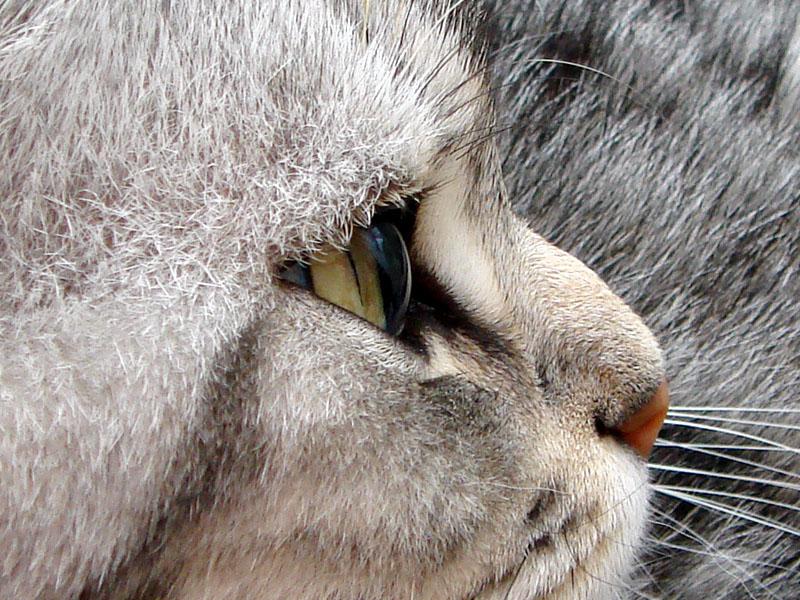 横から見るとビー玉みたいに丸いんダ!! 横からだと睫毛も確認しやすい。