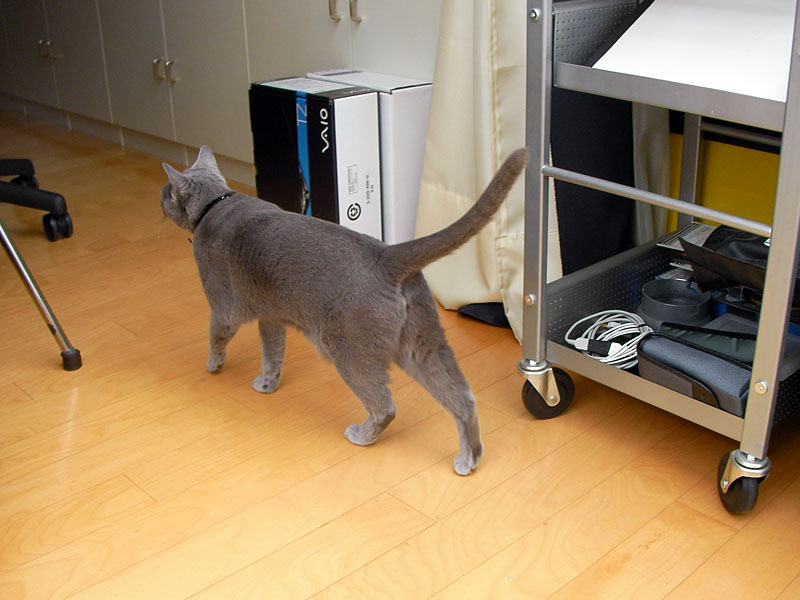 ていうか猫は地図なんかに頼らなくてもテリトリー内を自在に闊歩できるのだ。偉い。