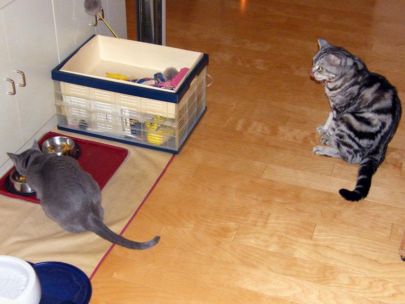 拙宅猫ちゃんはカリカリのフードが大好きだヨ!! 香港食い倒れなヤツと比べたら最強に健康的なんダ!!